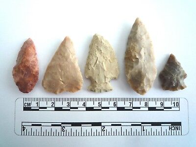 5 x Native American Arrowheads found in Texas, dating from approx 1000BC  (2203)