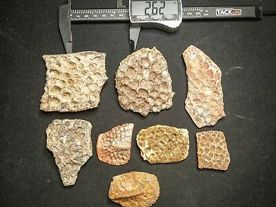 V10 - Top Beautiful Lot of 8 CROCODILE Dermal Scute Bones Cretaceous