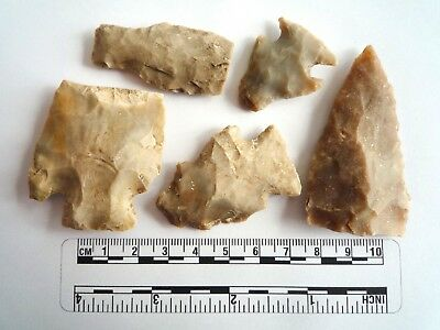 Native American Arrowheads found in Texas x 5, dating from approx 1000BC  (2264)