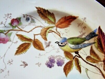ANTIQUE VINTAGE Bone China CABINET PLATE HAND PAINTED BLUE JAY BIRD ROSES BERRY