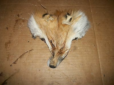 REAL FOX FUR FACE Ranch Fur Pelt Skin FLY TYING Native Craft Bag Decor Tanned
