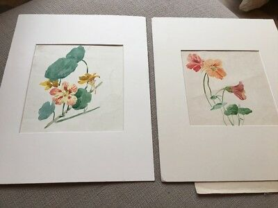 Pair Of Original Vintage Paintings Flowers c1930's, With Mounts