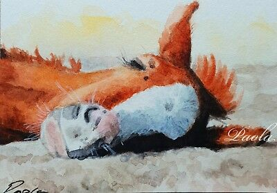 ACEO ORIGINAL watercolour sunbaking sleepy foal painting miniature art card