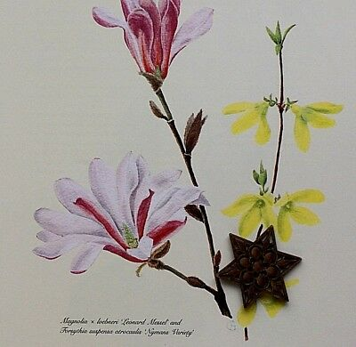 "VTG 1987 Art Print Botanic Illustration Flowering Shrubs 10"" x 12"" SEE VARIETY"