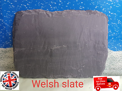 Fennstones natural slate tortoise beak lizard basking claw trim aquarium fish