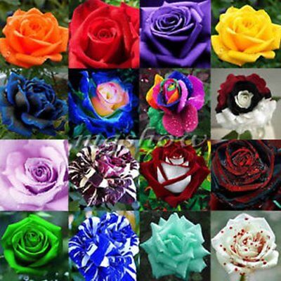 ~@-@~ Beautiful Mixed Variety Od 60+ Roses - 20 Seeds