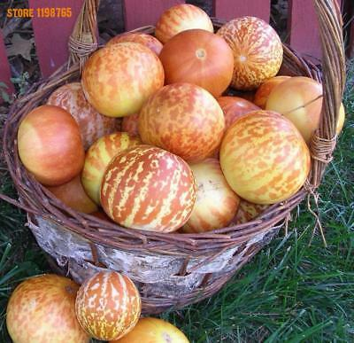 20 seeds semillas Tiger Melon (cucumis Melo) Rare Heirloom melon tigre