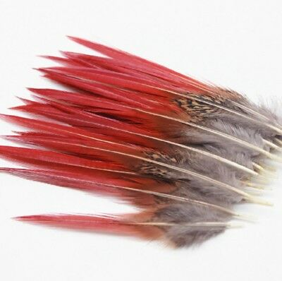 Large Natural Fire Tip Pheasant Tail Feathers 20-25cm Craft Hat Arts Decorations