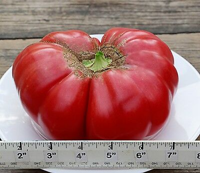 "Tomato ""NAPA GIANT "" 50 Seeds. Large Pink Sweet Beefsteak-. Heirloom. Non-GMO."