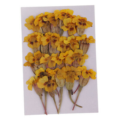 24pcs Pressed Natural Dried Flowers Maidenhair for Candle Making Decoration
