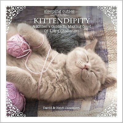 SLEEPING CUTIES KITTENDIPITY A Kitten's Guide on Life's Challenges GIFT BOOK