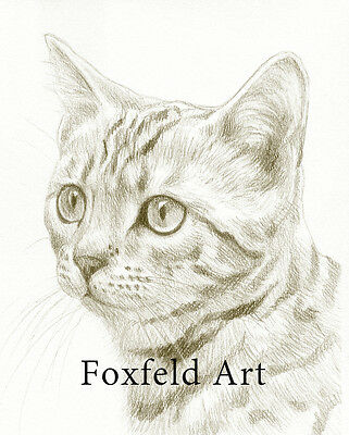 """8 x 6"""" Custom Pencil Pet Portrait - any pet drawn from your photos"""