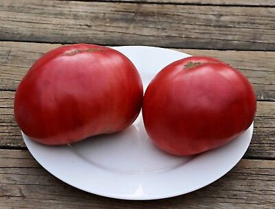 "Tomato ""CHEROKEE PURPLE "" 50 Seeds.Large, Sweet, Dark Purple-Pink. Combined S/H"