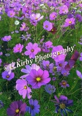 "Digital photo picture image wallpaper screensaver ""Wild flowers"" JPEG"