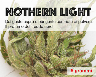 5 gr Erba legale light NOTHERN LIGHT
