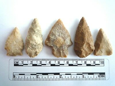 5 x Native American Arrowheads found in Texas, dating from approx 1000BC  (2227)