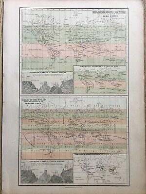 1858 Zoological & Botanical World Chart Antique Map A & C Black 160 Years Old