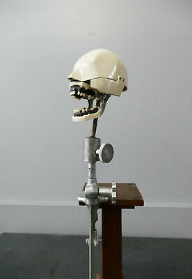 Columbia Dentoform Dental Phantom Dental Manikin Metal Vintage Dental