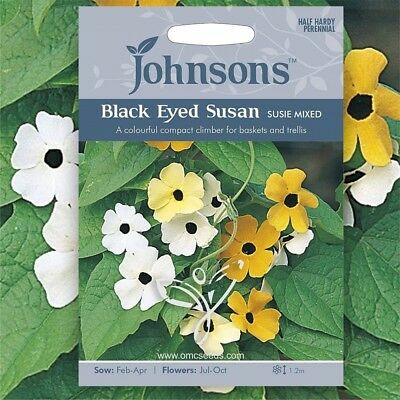 BLACK EYED SUSAN VINE (Thunbergia Alata Susie mixed) 25 seeds (#1645)