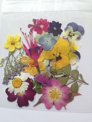 Pressed Flowers And Leaves 25 Mixed Pack