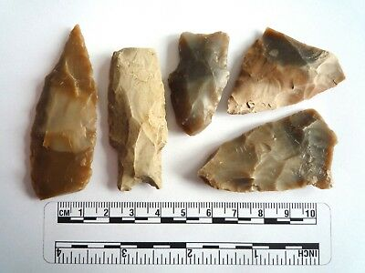 Native American Arrowheads found in Texas x 5, dating from approx 1000BC  (2265)