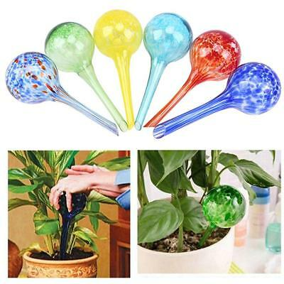 Glass Automatic Bulb Plant Watering Waterer Garden Houseplant Office New