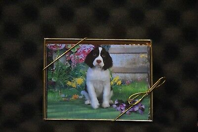 Springer Spaniel Puppies  Note Cards