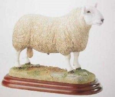 Border Fine Arts Studio Sheep Breeds Collection North Country Cheviot Ram A3227