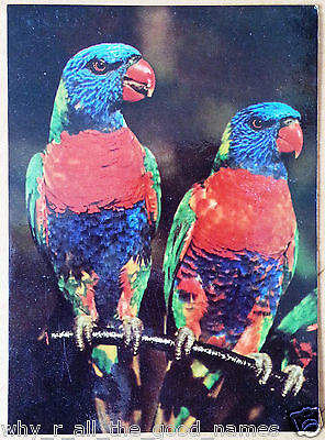 Old Vintage 1970's POSTCARD - RAINBOW LORIKEET produced by Healeville Sanctuary