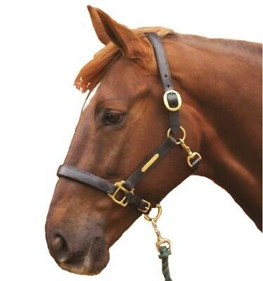 Hy Leather Brown Leather Headcollar for horses & ponies | head collar