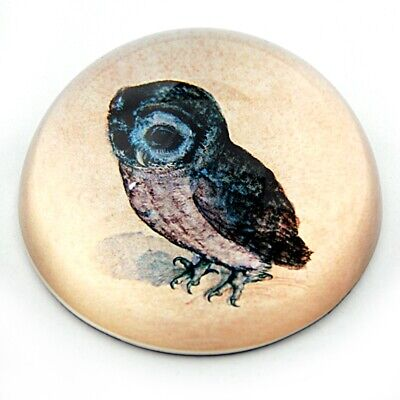 Owl Drawing Glass Dome Desk Paperweight by Albrecht Durer 3W Audubon Gift
