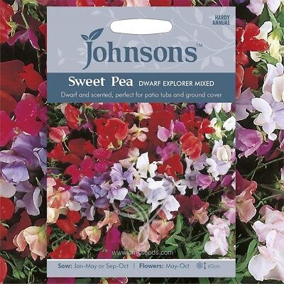 SWEET PEA (Lathyrus Odoratus Dwarf Explorer Mixed) 25 seeds (#1996)