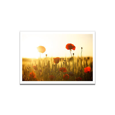 Poppy Flower Canvas Painting Poster Living Room Picture Wall Home  Art Decor