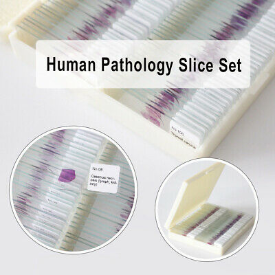 100PCS Human Pathology Microscope Prepared Slides Set Specimen