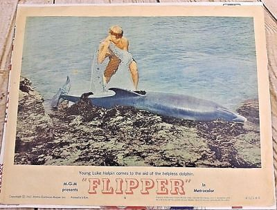 FLIPPER LOBBY CARD #6 Young Luke Halpin and the Friendly Dolphin 1963 14x11