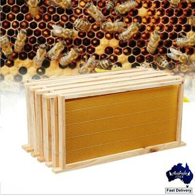 Bees Wax Foundation+Wooden Chinese Fir Beehive Frame 20PCS Beekeeping Kits