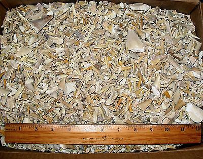 Eocene shark tooth fossils 250g unsorted bag ray reptile teeth Morocco wholesale
