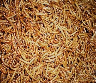 Dried Mealworms - Top Quality - All Sizes Wild Bird Dried Mealworm -FREE UK Post