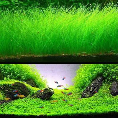 Aquarium Paysage Aquatique Plante Aquatique Mini Feuille Vivante Plante Aquarium