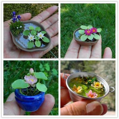 Mini Lotus Seed DIY Potted Plants Indoor Bonsai Ornaments Water Lily IS