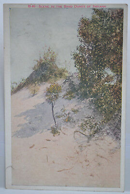 Scene In The Sand Dunes Of Indiana Postcard - Used
