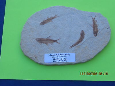 Fossil Fish  Plate Of Four