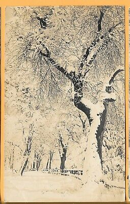 Winter And Snow In Yosemite National Park, California. Rppc. Used.
