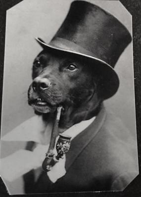 Unique Bizarre Odd Interesting Victorian Dog With Pipe tintype C1452RP
