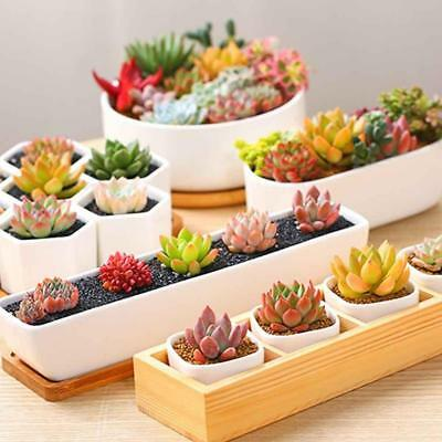 300Pcs/bag Mix Succulent Seeds Lotus Bonsai Plants Seeds.