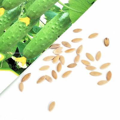 20Pcs Cucumber Seed Organic Russian Pickling Vegetable/Fruit Home Garden Plant