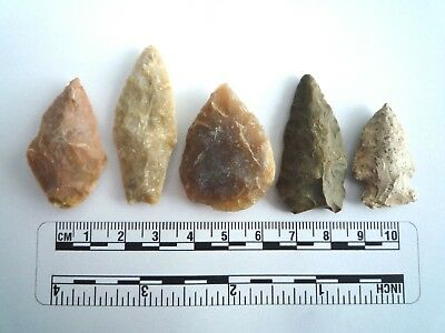 5 x Native American Arrowheads found in Texas, dating from approx 1000BC  (2232)