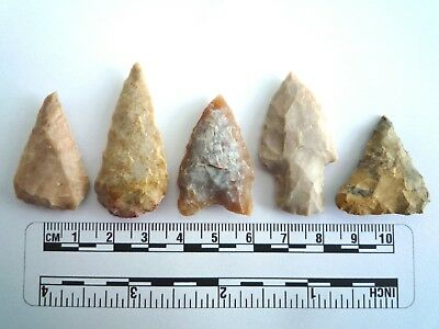 5 x Native American Arrowheads found in Texas, dating from approx 1000BC  (2208)