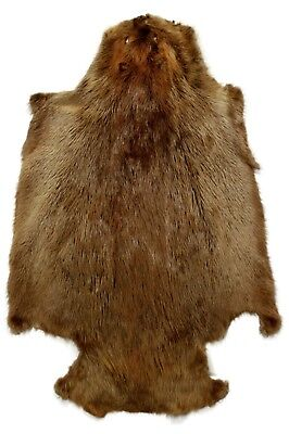 """AuSable Brand Professionally Tanned XL Badger Fur W// Face /& Tail 26/"""" 1 Pelt"""