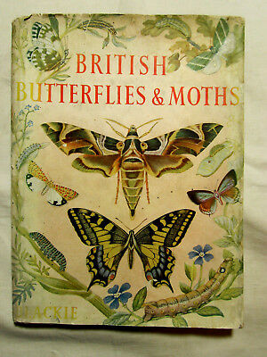 British Butterflies & Moths by St. Vincent - Illustrated by Haywood - HB c1930s